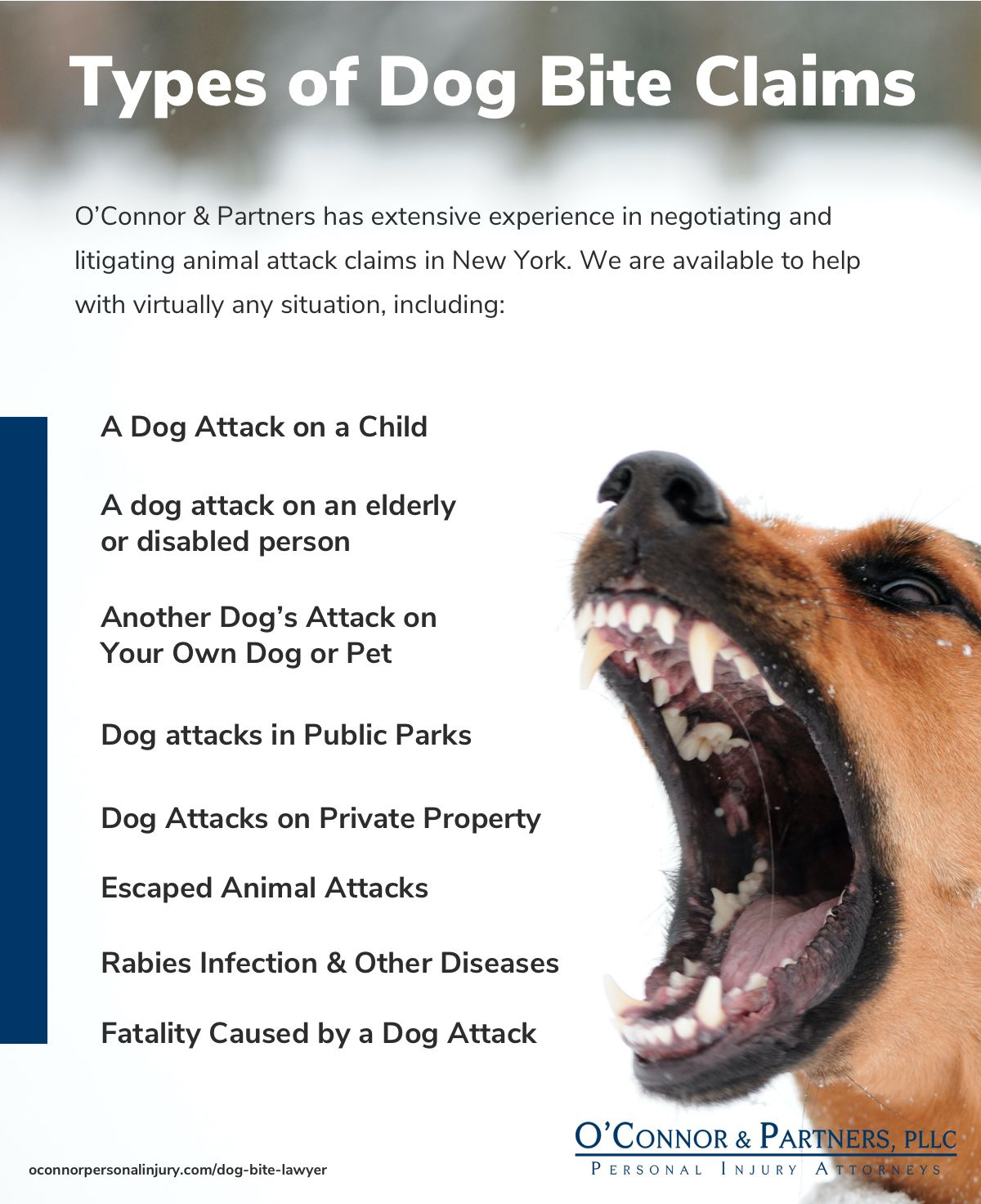 Examples of Dog Bite Injury Claims