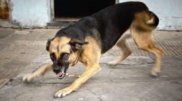 Who Pays Dog Bite Compensation? | O'Connor and Partners